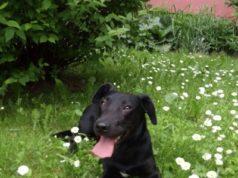 wydatek na psa asystującego lexagit.pl porady prawne online